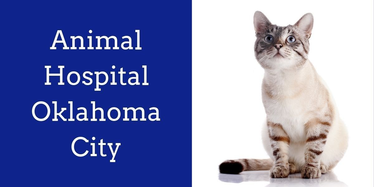 Animal_Hospital_Oklahoma_City