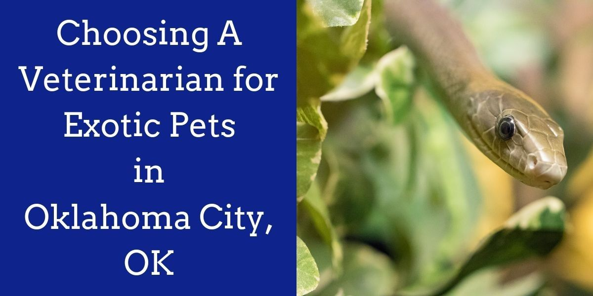 Choosing_A_Veterinarian_for_Exotic_Pets_in_Oklahoma_City_OK