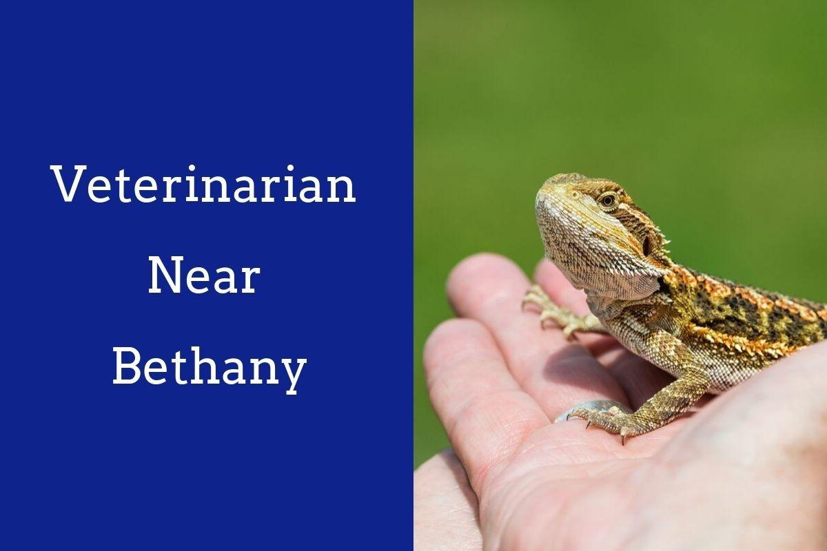 Veterinarian-Near-Bethany-1