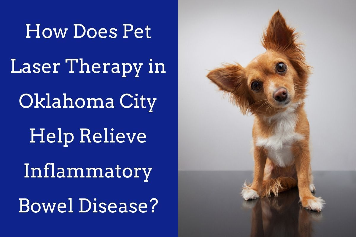 How-Does-Pet-Laser-Therapy-in-Oklahoma-City-Help-Relieve-Inflammatory-Bowel-Disease_-