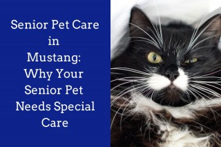 Senior-Pet-Care-in-Mustang_-Why-Your-Senior-Pet-Needs-Special-Care