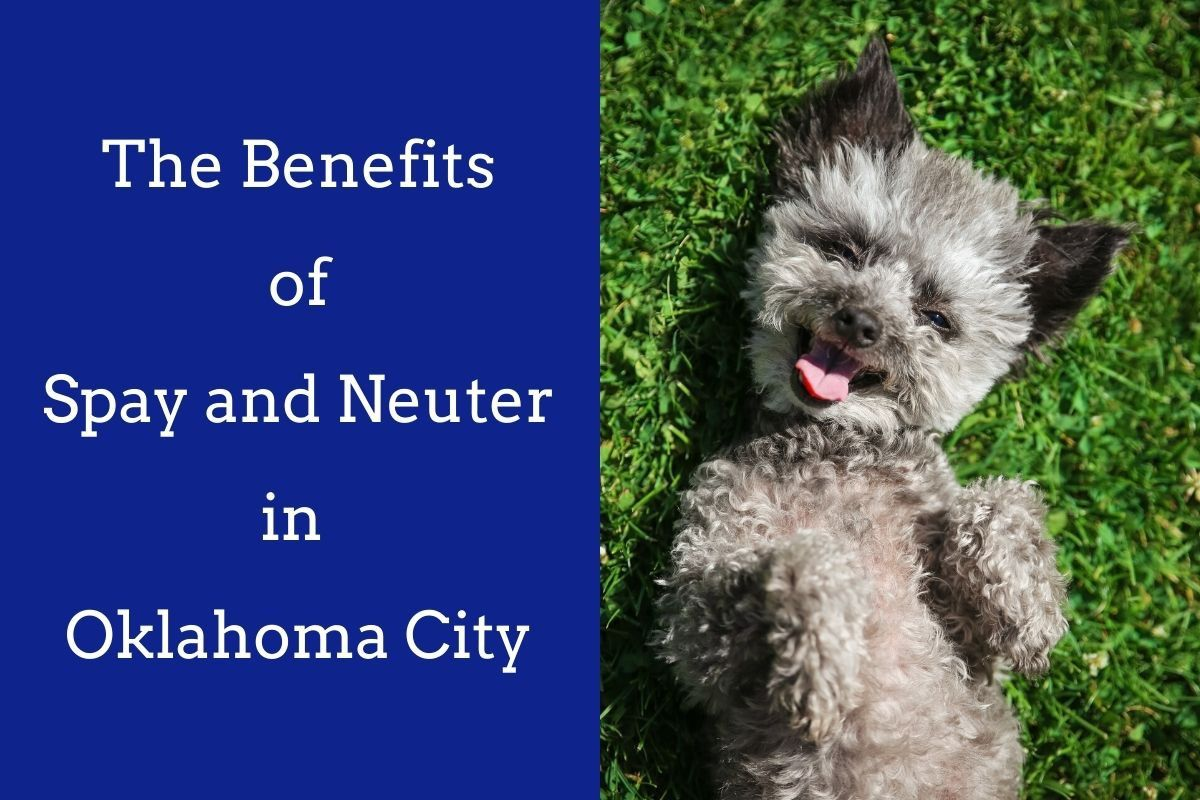 How-Does-Pet-Laser-Therapy-in-Oklahoma-City-Help-Relieve-Inflammatory-Bowel-Disease_--1