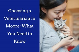 Choosing-a-Veterinarian-in-Moore_-What-You-Need-to-Know