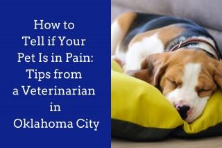 How-to-Tell-if-Your-Pet-Is-in-Pain_-Tips-from-a-Veterinarian-in-Oklahoma-City