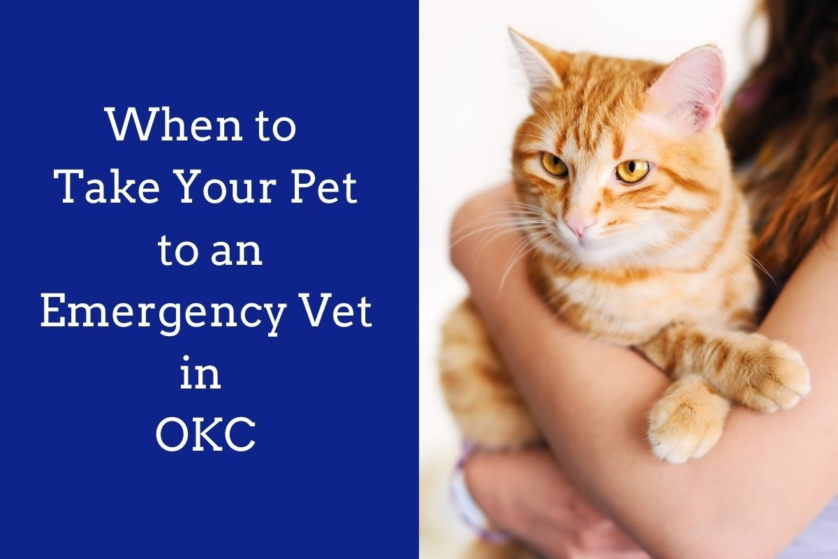 When-to-Take-Your-Pet-to-an-Emergency-Vet-in-OKC