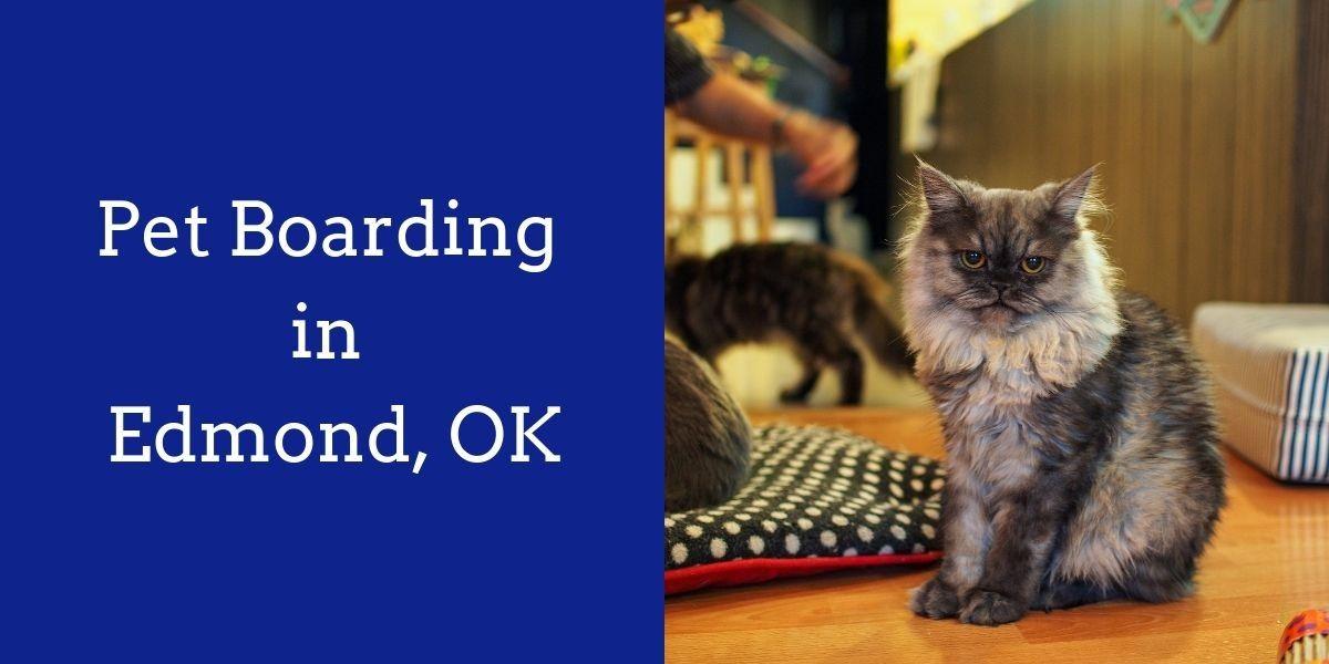 Pet_Boarding_in_Edmond_OK