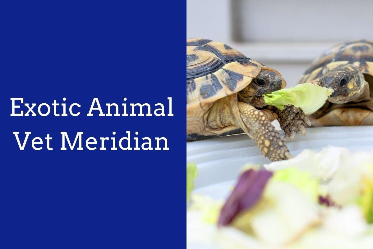 Exotic-Animal-Vet-Meridian