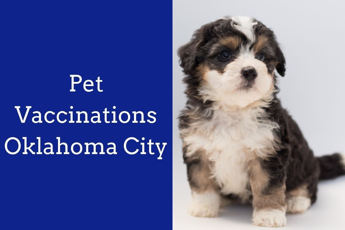 Pet-Vaccinations-Oklahoma-City