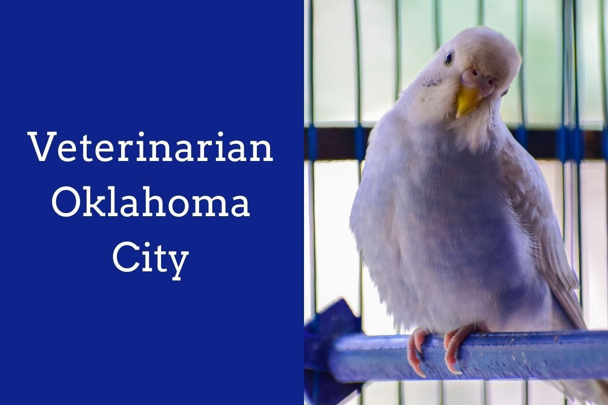 Veterinarian-Oklahoma-City