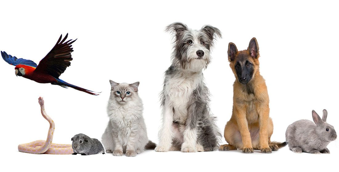 group of pets and exotic animals together over a white banner isolated on white background